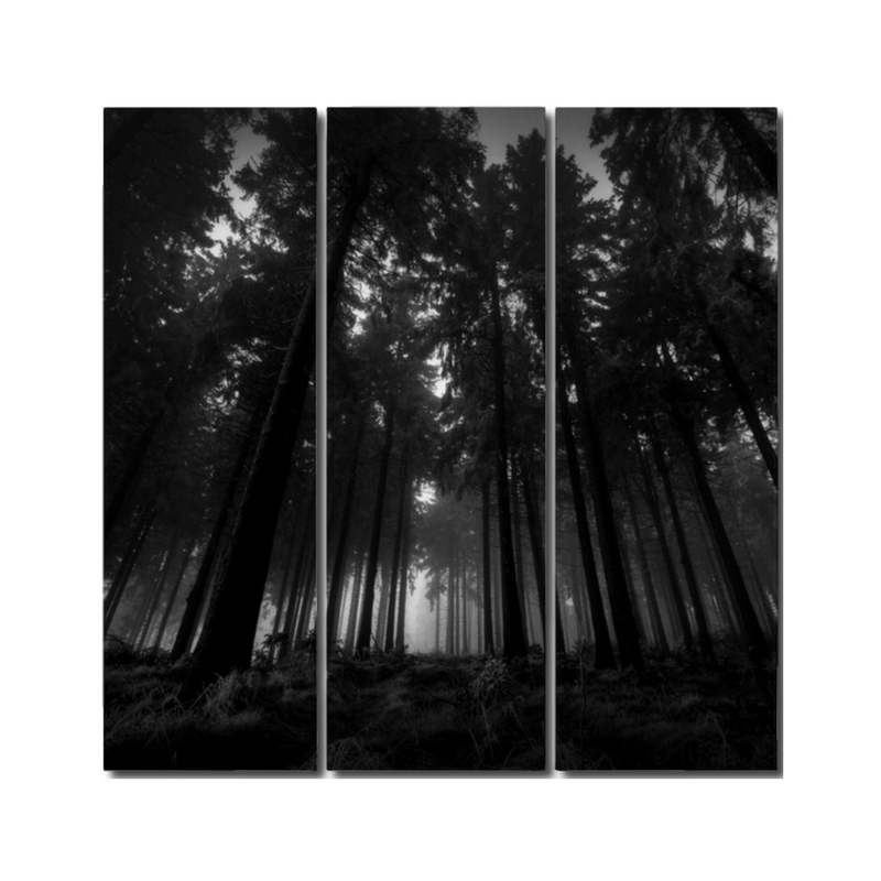 Dark Forest Triptych Print by Nick Angel -  Black Kaps